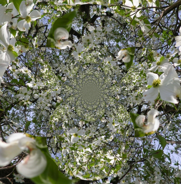 infiniteflowers